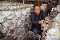 農作廢棄物種植蘑菇