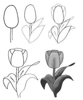 手把手教你怎么画花朵的简笔画
