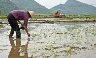 ?新型肺炎疫情下,2020年農民春耕備肥注意事項