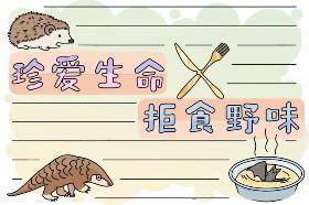 拒食野生动物手抄报 珍爱生命,拒食野味