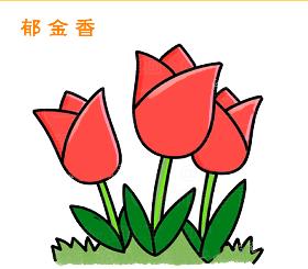 郁金香简笔画